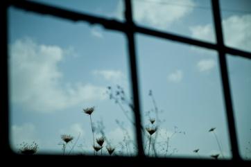 in window